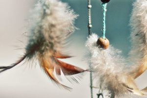 plomes penjades d' unes cordes del caçasomnis